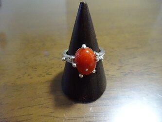 赤珊瑚のリングの画像