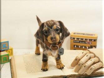 羊毛フェルト 犬 ダックスさん ダップル ダックスフント ダックスフンド 犬フィギュアの画像