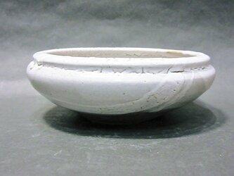 盆栽鉢(カイラギ)の画像