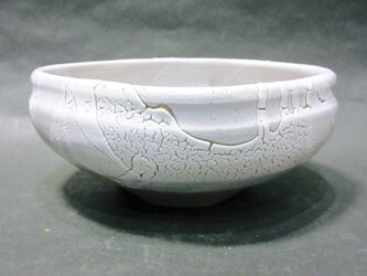 盆栽鉢(カイラギ・四角)の画像