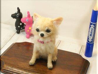 羊毛フェルト 犬 チワワさん クリーム いぬ イヌ 犬フィギュアの画像