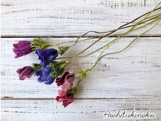 アネモネ6本セット ブルー、赤、ピンク3色各2本 ドライフラワー花材 ハーバリウム リース スワッグ の画像