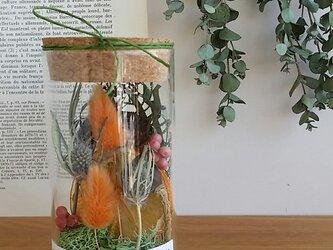 ガラスの中の小さな植物園・フラワーボトル♬の画像
