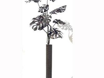 【鉄の植物 カセキの時間シリーズ】OKP-051 想-モンステラの画像