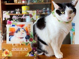 ビッグサイズ 世界にひとつ うちの子記念 アクリルフォトスタンド ペット メモリアル 写真 ブライダル 入学 出産 猫の画像
