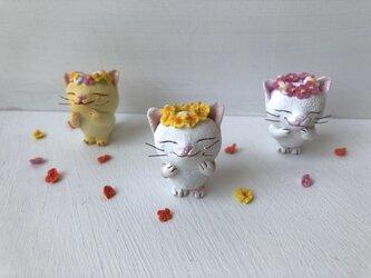 花かんむり猫さん 白茶トラの画像
