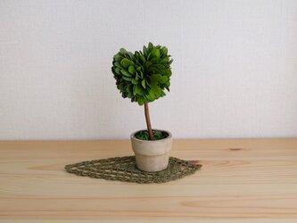 小さな敷物〈長細い葉っぱ編〉の画像