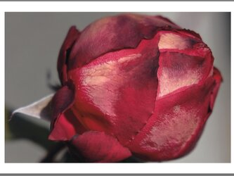 Fragments - Flower -の画像
