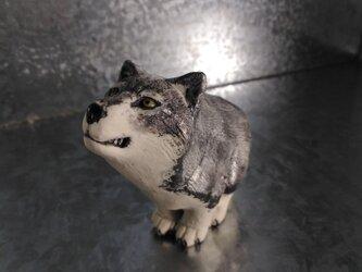 200gAs オオカミの画像