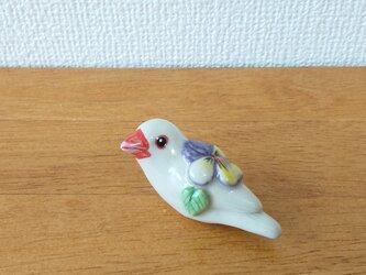 花小鳥/小(陶)白文鳥・ビオラの画像