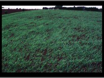 スチル・ライフ - Grassland -の画像