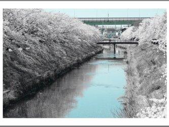 Tenki 2019 - Sakura -の画像