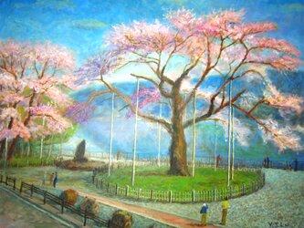 荘川桜の画像