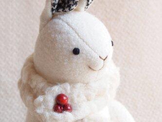 ホッキョクウサギの画像