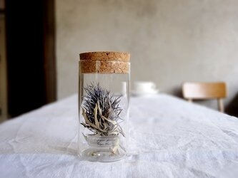 植物標本 Botanical Collection■Lサイズボトル■ No.L-20 エリンジュームの画像