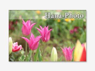 1393) 可愛くて、美しいチューリップ  ポストカード5枚組の画像