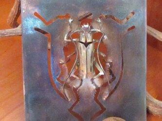 昆虫 カミキリムシの画像