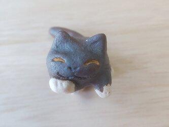 ちび猫=^人^=ソックス猫の画像