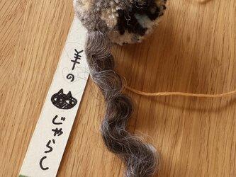 羊の猫じゃらし#08の画像