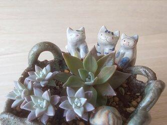 引っかけ猫=^人^=青トラ猫の画像