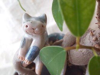 引っかけ猫=^人^=青ぶち猫の画像