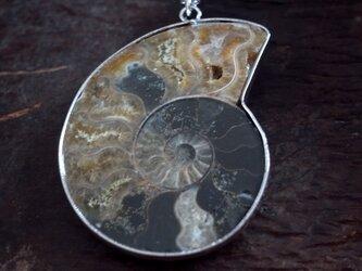 化石ネックレス アンモナイト巻き貝スライスの画像