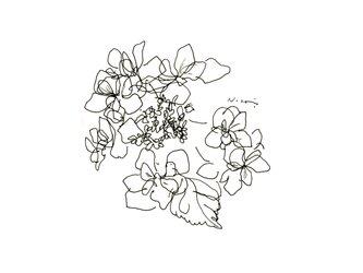『額紫陽花』・インテリア アートの画像
