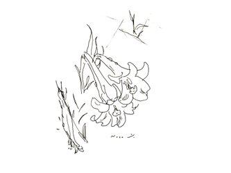 『白ゆり』・インテリア アートの画像