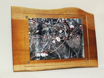 木製壁掛けフォトフレームA4サイズ対応 No.5朱里桜の天然木の画像