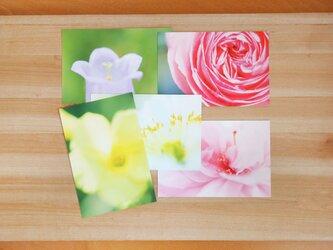 フォトポストカード 5枚セット / 花々の色彩と造形の画像