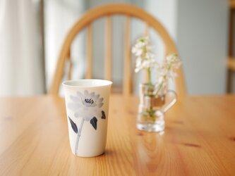 小さなコップ マツムシ草の画像