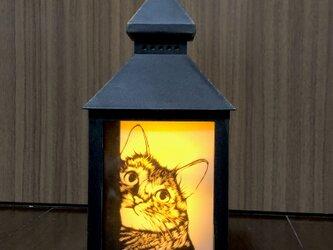 猫のランプの画像