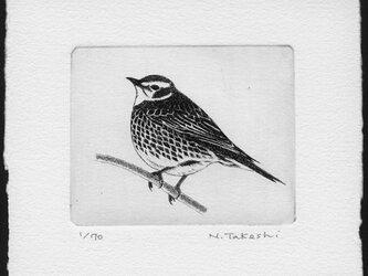 小鳥・2020 / 銅版画 (作品のみ)の画像