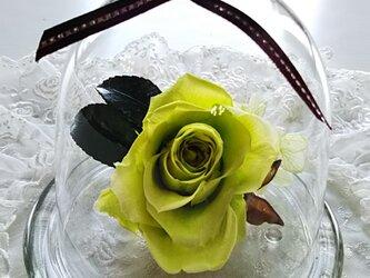 ♡あなたにグリーンの癒しを♡の画像