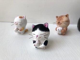 逢いたかった猫さん 白黒の画像
