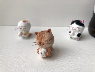 逢いたかった猫さん 茶トラの画像