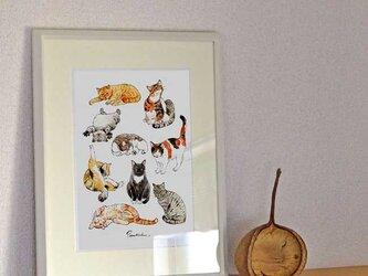 A4ポスター 猫の画像