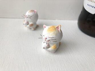 逢いたかった猫さん 黄トラ白の画像