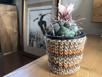 cactus鉢カバーの画像