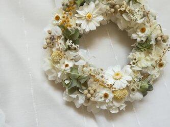 ジニアと花かんざしの白のwreathの画像