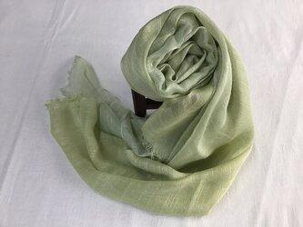 草木染め 絹ストール コブナグサの画像