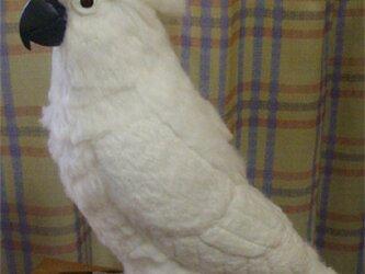 ライフサイズ!タイハクオウム 受注作成 羊毛フェルト 鳥のオブジェ リアルバード 羊毛インコフィギュア オーダー作成可の画像