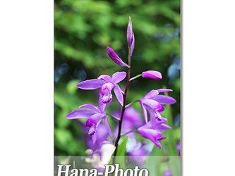 1397) 青や紫の花   ポストカード5枚組の画像