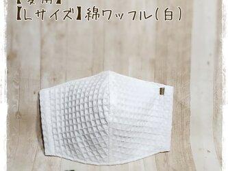【夏用】(L)綿ワッフル(白×GY)*ワイヤ入立体マスクの画像