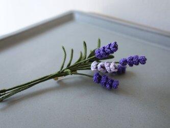 bouquet of lavenderの画像