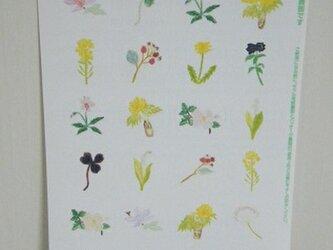 シール〈Plant-3〉の画像