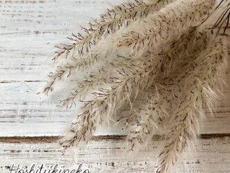 チガヤ ショート10本セット 7~9cmナチュラル ドライフラワー花材 ハーバリウム スワッグにおすすめ 星月猫の画像