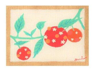 果実の画像