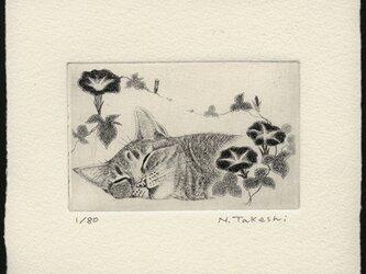 朝顔とお昼寝の猫/ 銅版画 (作品のみ)の画像
