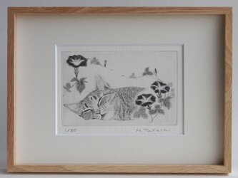 朝顔とお昼寝の猫/ 銅版画 (額あり)の画像